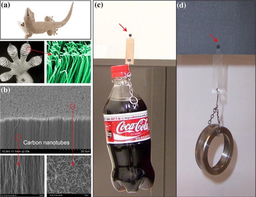 """a)Gekko ja sen jalan pintarakenne, b) nanoputkitarran rakenne, c) 650 gramman kolapullo pysyy lasissa 4x4 millimetrin nanotarralla, d) 4x4 millin nanotarra pitää 150 gramman teräsrenkaan kiinni hiekkapaperissa Kuva: <span class=""""photographer"""">Science</span>"""