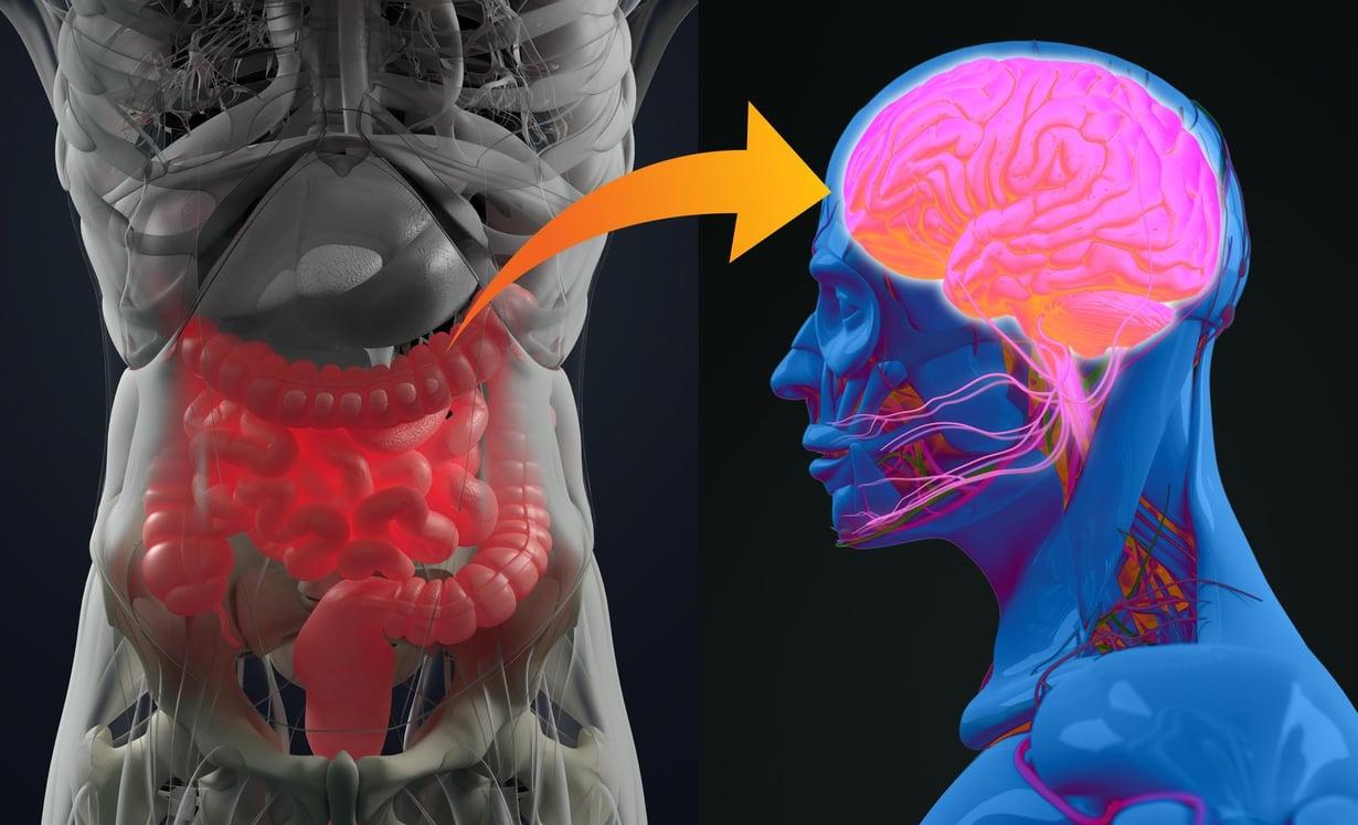 Suolistolla on yhteys aivoihin. Kuva: Shutterstock