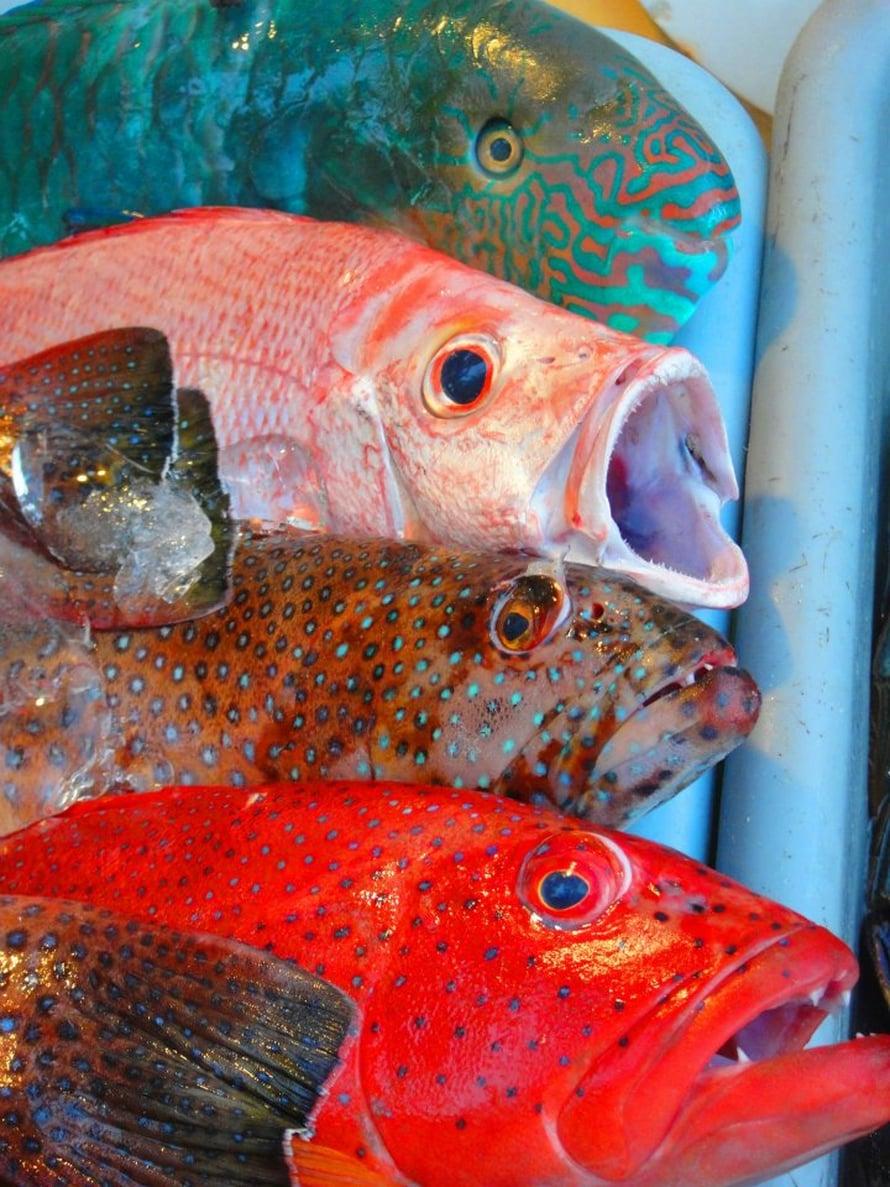 Trooppisten alueiden kalojen arvioidaan pienenevän noin 20 prosenttia.