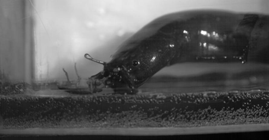 """Ankeriasmonni yllättää hyönteisen kuivalta maalta. Kuva: <span class=""""photographer"""">Sam van Wassenbergh</span>"""