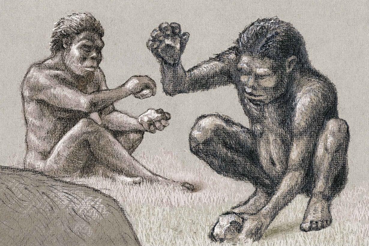 Nokkela-apinaihmiset käyttivät aikansa huipputekniikkaa, iskuriksi muotoiltua kiveä. Kuva: Olli Österberg