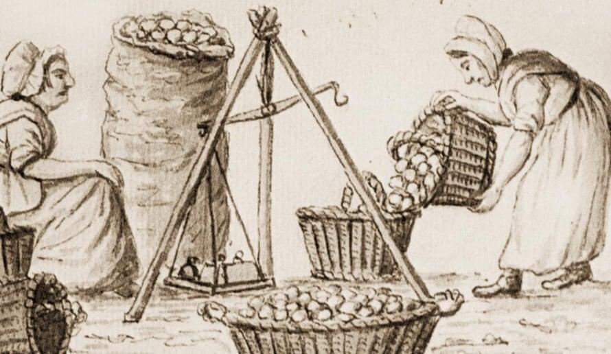 """Irlantilaisia punnitsemassa perunoita Corkissa 1800-luvun alussa. Peruna oli keskeinen ravinto suurelle osalle Irlannin väestöä 1800-luvulla. Piirros on teoksesta The Irish World. Kuva: <span class=""""photographer"""">Sampson Towgood Roch</span>"""