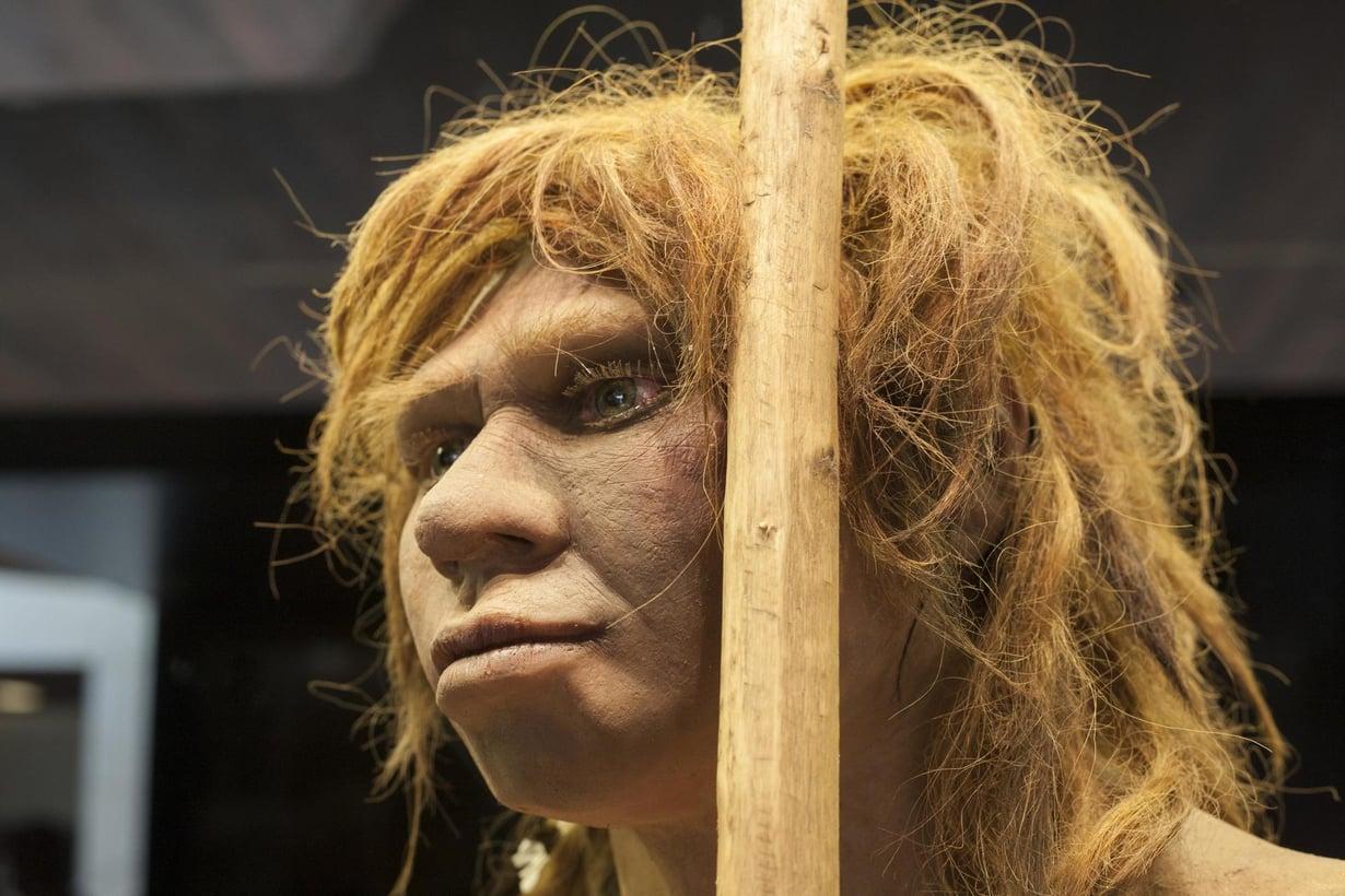 Tältä näyttää neandertalilaisnainen Madridin arkeologisen museon hahmotelmassa. Kuva: Juan Aunion, Shutterstock