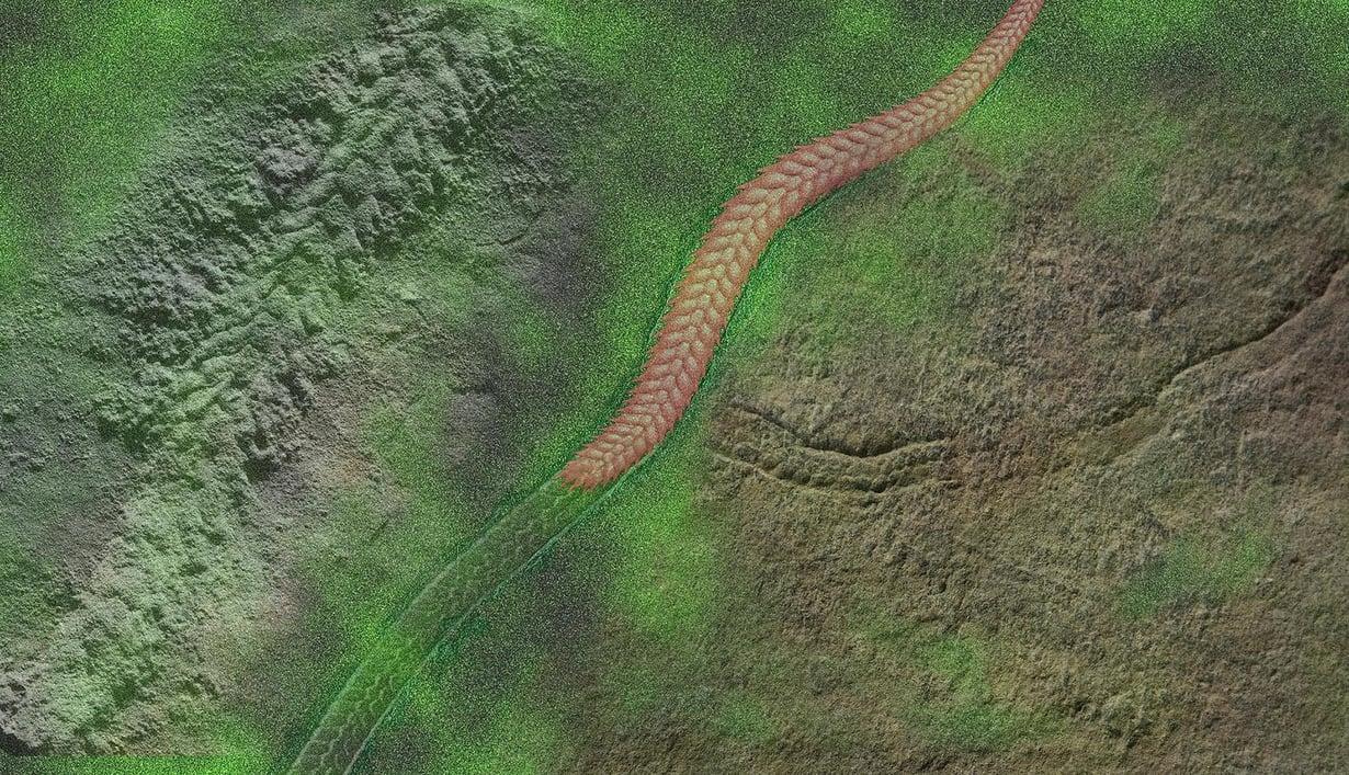 Taitelijan näkemys Yilingia spiciformisista. Kuva: Nature