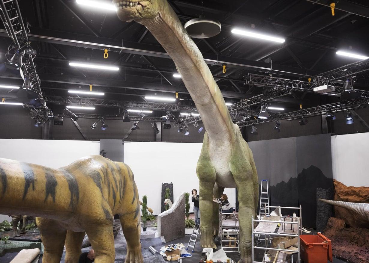 Brachiosaurusta valmisteltiin näyttelykuntoon. Kuva: Aku Isotalo