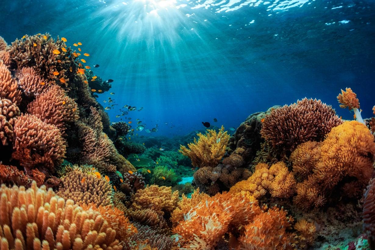 Korallien kalkkirangat vaarantuvat. Kuva: Alamy/MVPhotos
