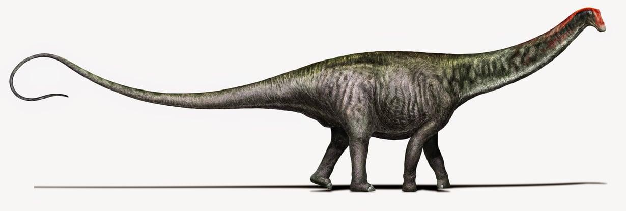 Brontosauruksella on nykykäsityksen mukaan kapea pää niin kuin Diplodocus-dinoilla.