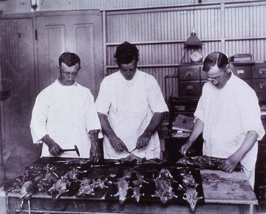 """New Orleansin satamassa havaittiin vuonna 1914 ruttoa, mikä sai aikaan suuren rottien ansoitusoperaation. Kuva: <span class=""""photographer"""">Wikimedia Commons</span>"""