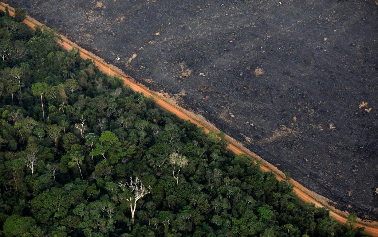 Amazonin metsäkato voi lopulta johtaa muutoksiin kohti savannia. Kuva: Bruno Kelly / Reuters