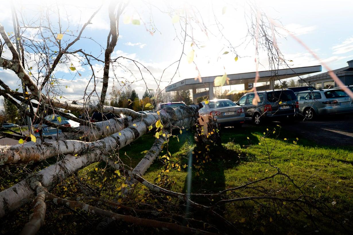 Valio rysäytti puita nurin autoliikkeen pihassa Ylivieskassa 2.10.2015. Kuva: Lehtikuva