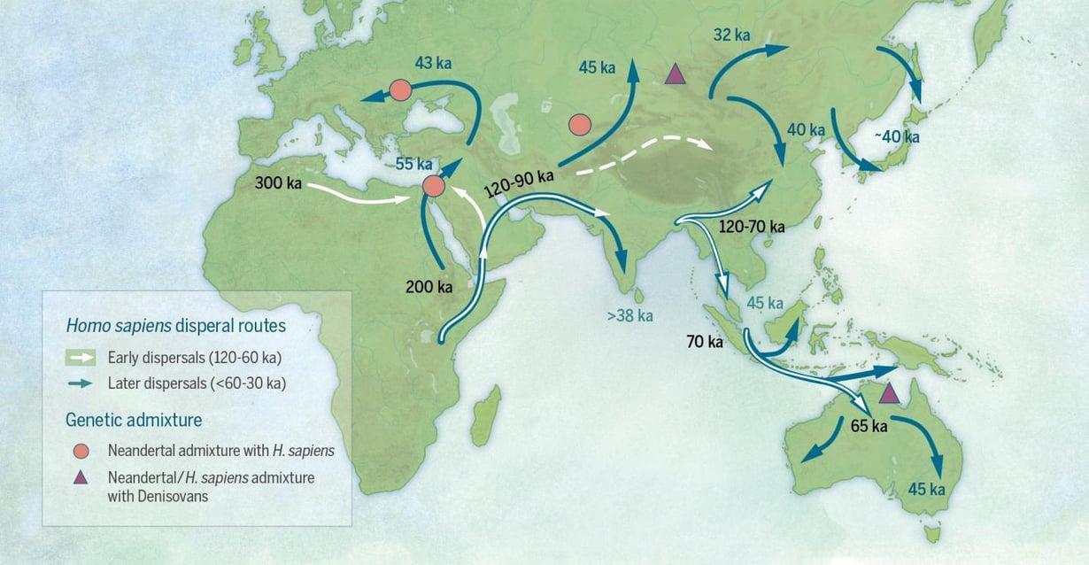 Kartta näyttää nykyihmisen muutot Afrikasta. Varhaiset lähdöt (valkoiset nuolet) tapahtuivat 60 000–120 000 vuotta sitten, myöhemmät muutot (siniset nuolet) 30 000–60 000 vuotta sitten. Matkalla Homo sapiens risteytyi neandertalinihmisten kanssa (punainen täplä) ja neandertalilaiset ja nykyihmiset denisovanihmisten kanssa (kolmio). Kuva: Katerina Douka ja Michelle O'Reilly / Science