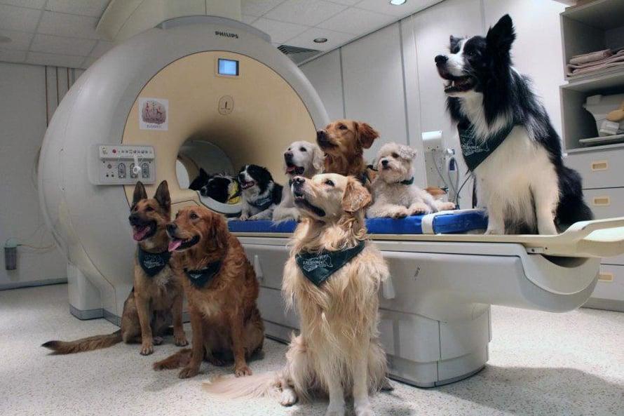 """Tutkimkseen osallistuneiden koirien aivoja kuvattiin magneettikuvauslaitteella. Kuva: <span class=""""photographer"""">Enik Kubinyi</span>"""