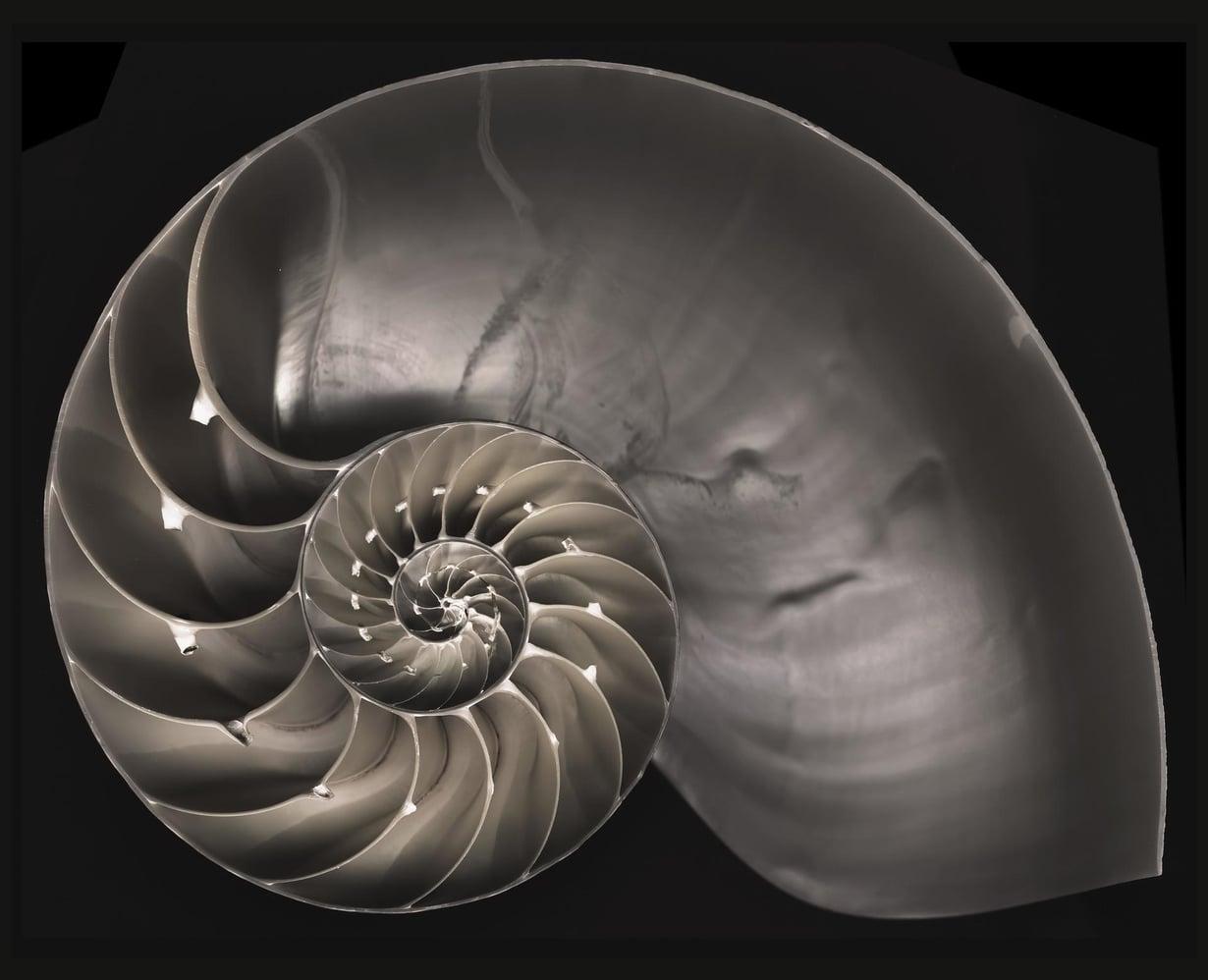 Matematiikka nousi kymppiin kirjainjonolla, joka noudattaa kotilon rakennetta. Kuva: F. Martinez Clavel /SPL/MVPhotos