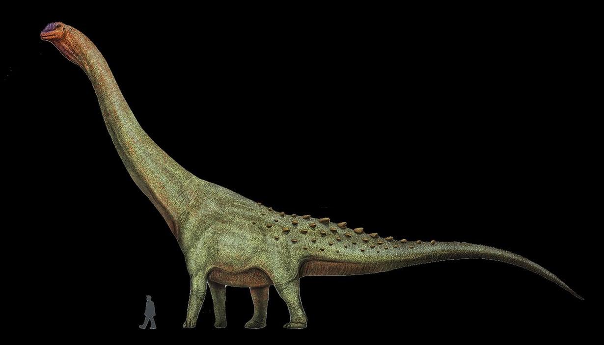 Maailman suurimman koskaan eläneen maaeläimen titteliä kantava patagotitan kuuluu sauropodeihin, jotka tunnetaan pitkästä kaulastaan ja hännästään. Kuva: Wikimedia Commons