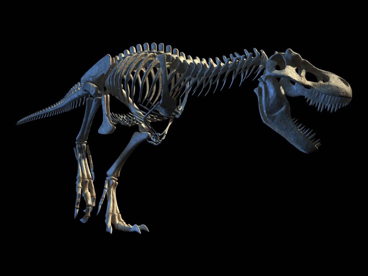 Tietokonemallinnus Tyrannosaurus rexin luurangosta. Kuva: Leonello Calvetti / Science Photo Library
