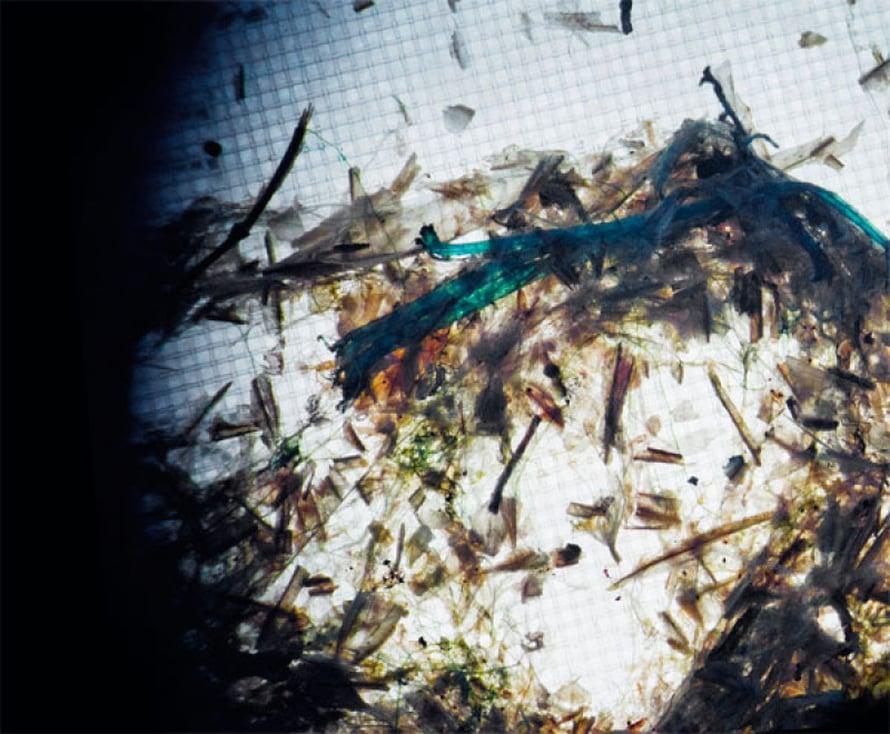 Mikroroskaa. Sininen muovikuitu kävi pyydykseen Airiston edustalla. Kuvat: Lauri Rotko