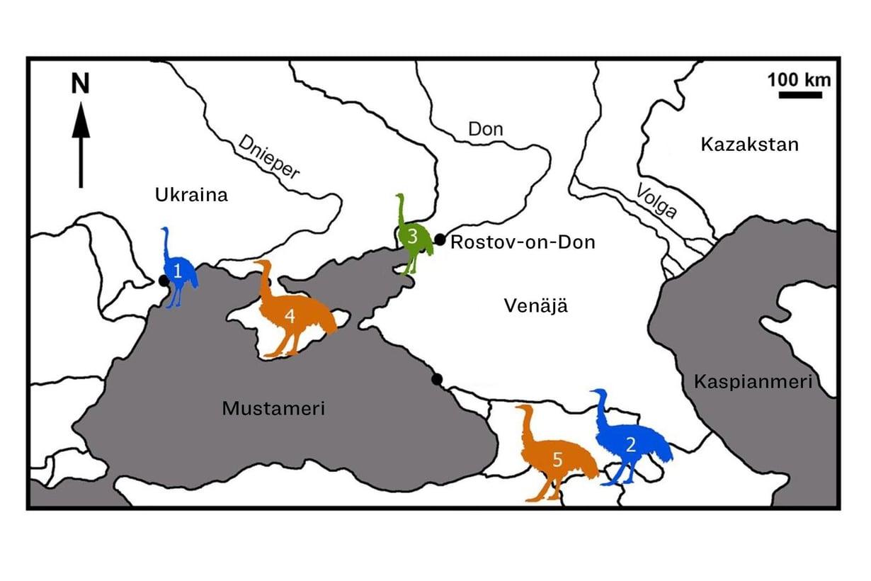 Muinaisen linnun reisiluita löytyi Krimin niemimaalta autotien rakentamisen yhteydessä. Kuva: Nikita Zelenkov et al.