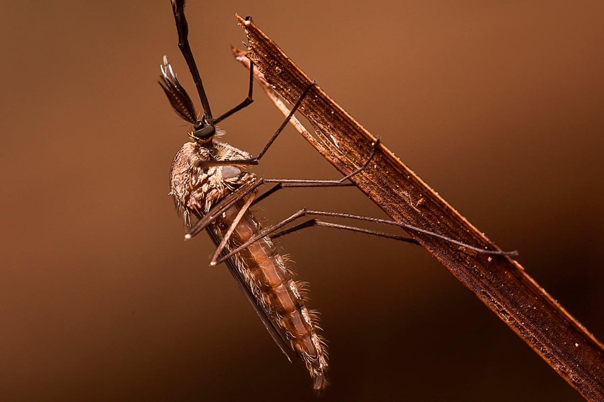 Naaraan sylki sisältää allergisoivia valkuaisaineita. Kuva: Getty Images