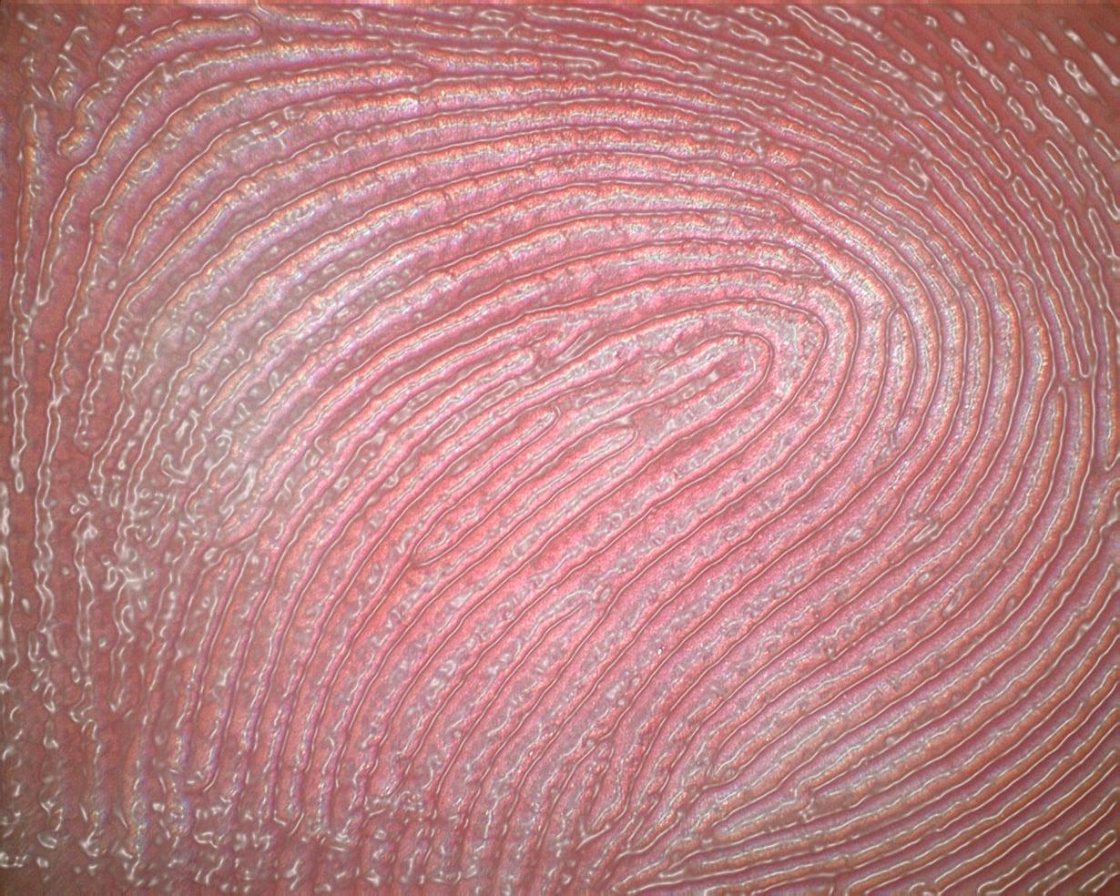 Tietokone on tässä korostanut niitä harjanteita, joita meillä kaikilla on sormenpäissämme. Kuva: DAVID BECKER / SCIENCE PHOTO LIBRARY