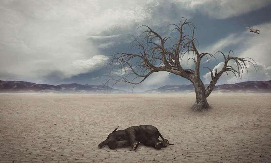 """Vuosia kestävä pilvipeite viilentää maapalloa laajalti ja on yksi menneiden isojen sukupuuttojen syy. Kuva: <span class=""""photographer"""">CCO Public domain</span>"""