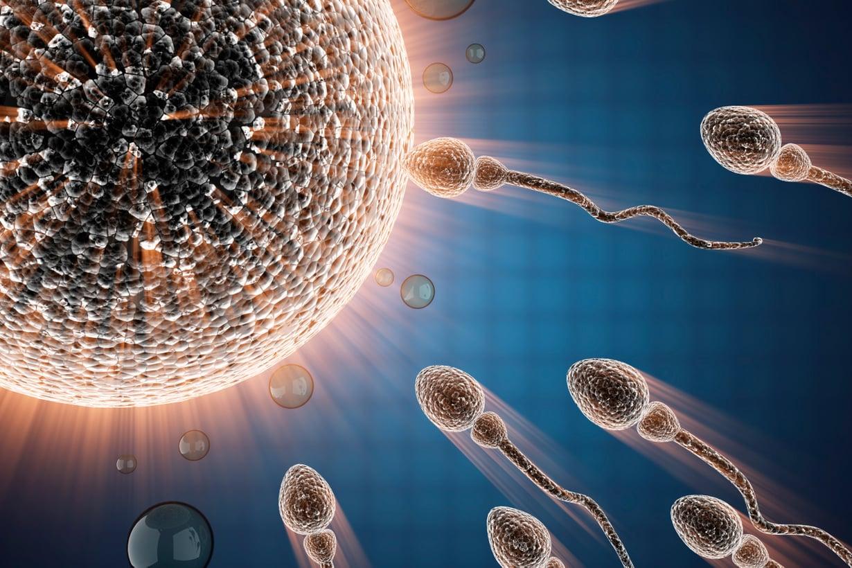 Munasolun kalvon läpäisy antaa siittiön mitokondrioille toimintamerkin. Kuva: Shutterstock