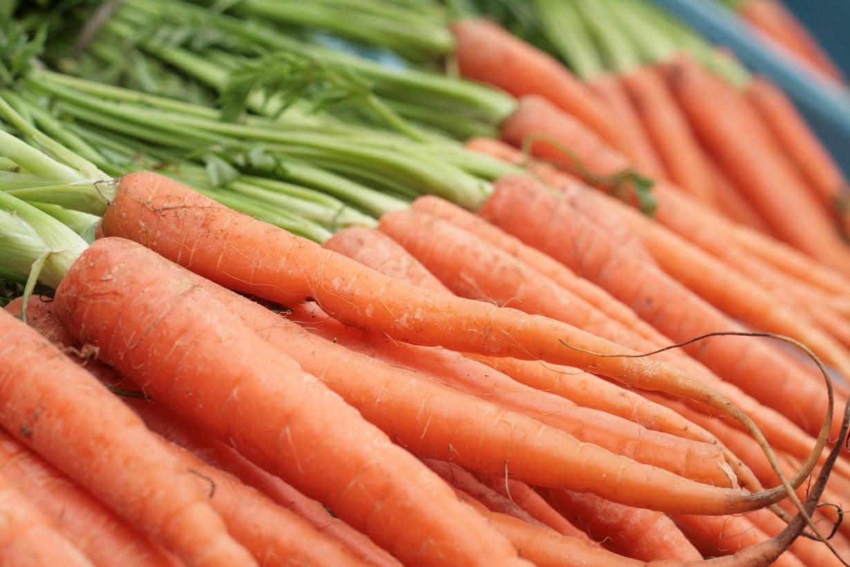 Porkkanalla pysyy terävämpänä.