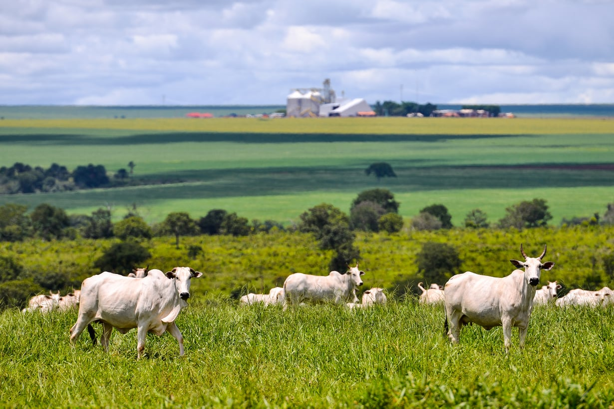 Karjatalous kasvattaa päästöjä. Kuva: Getty Images