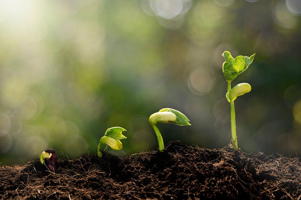 Valoherkät pigmentit toimivat kuin silmät. Niillä kasvi tunnistaa päivän ja yön ja päivän pitenemisen. Kuva: Shutterstock