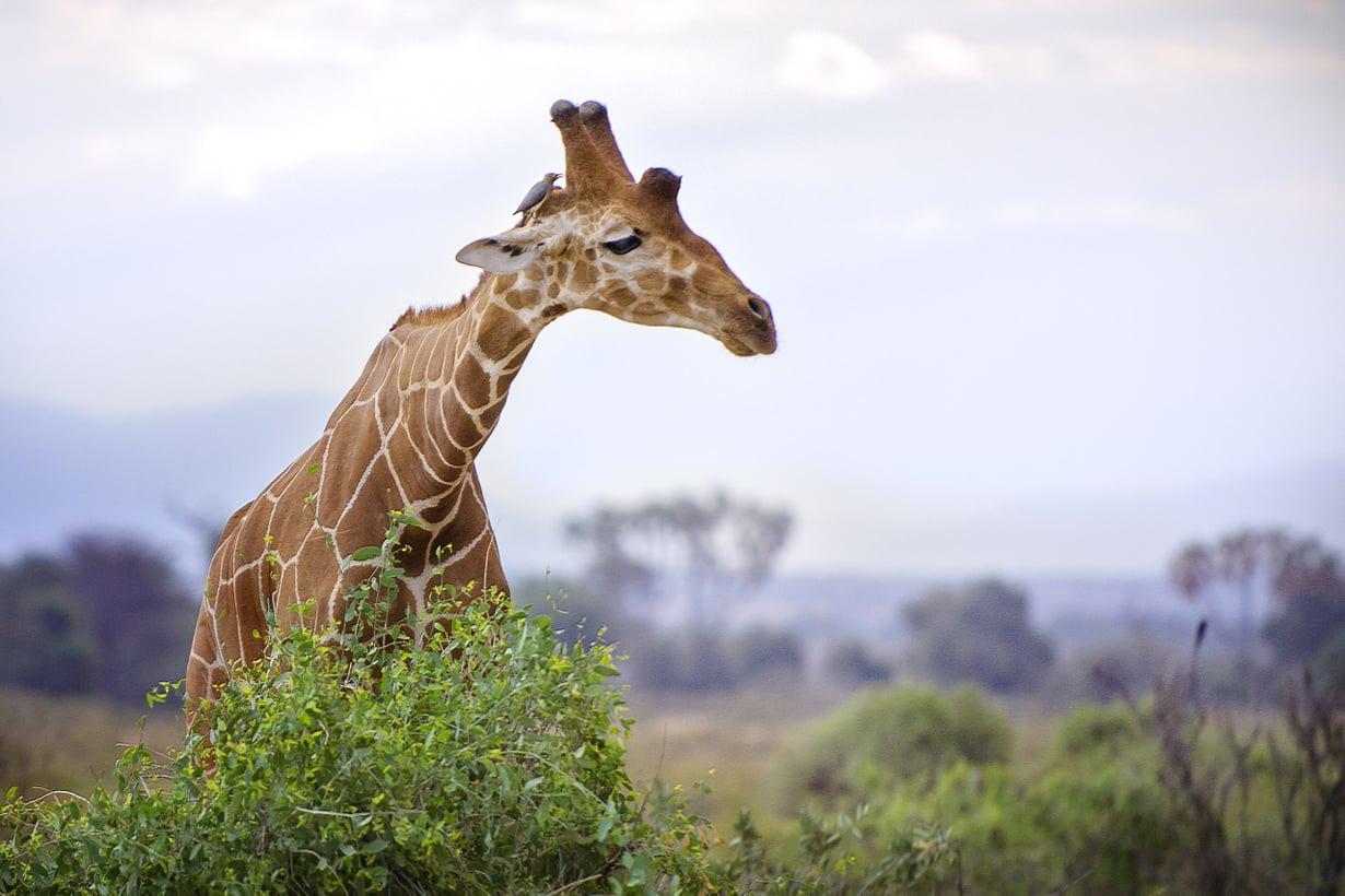 Kannattaa nostaa hitaasti. Kuva: Getty Images