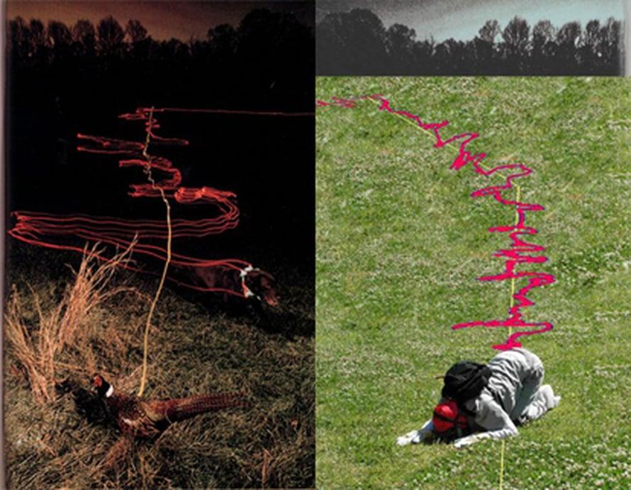"""Ihmisen haisti häviää koiralle, mutta luultua vähemmän.  Kuva: <span class=""""photographer"""">Jess Porter, UC Berkeley.</span>"""