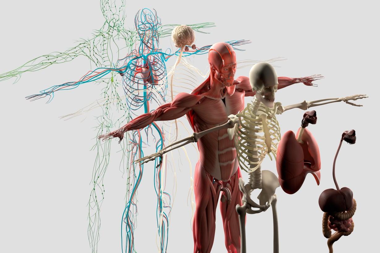 Suunnitteluvirheitä löytyy niin tukirangasta kuin elimistön toiminnoista. Kuva: Getty Images