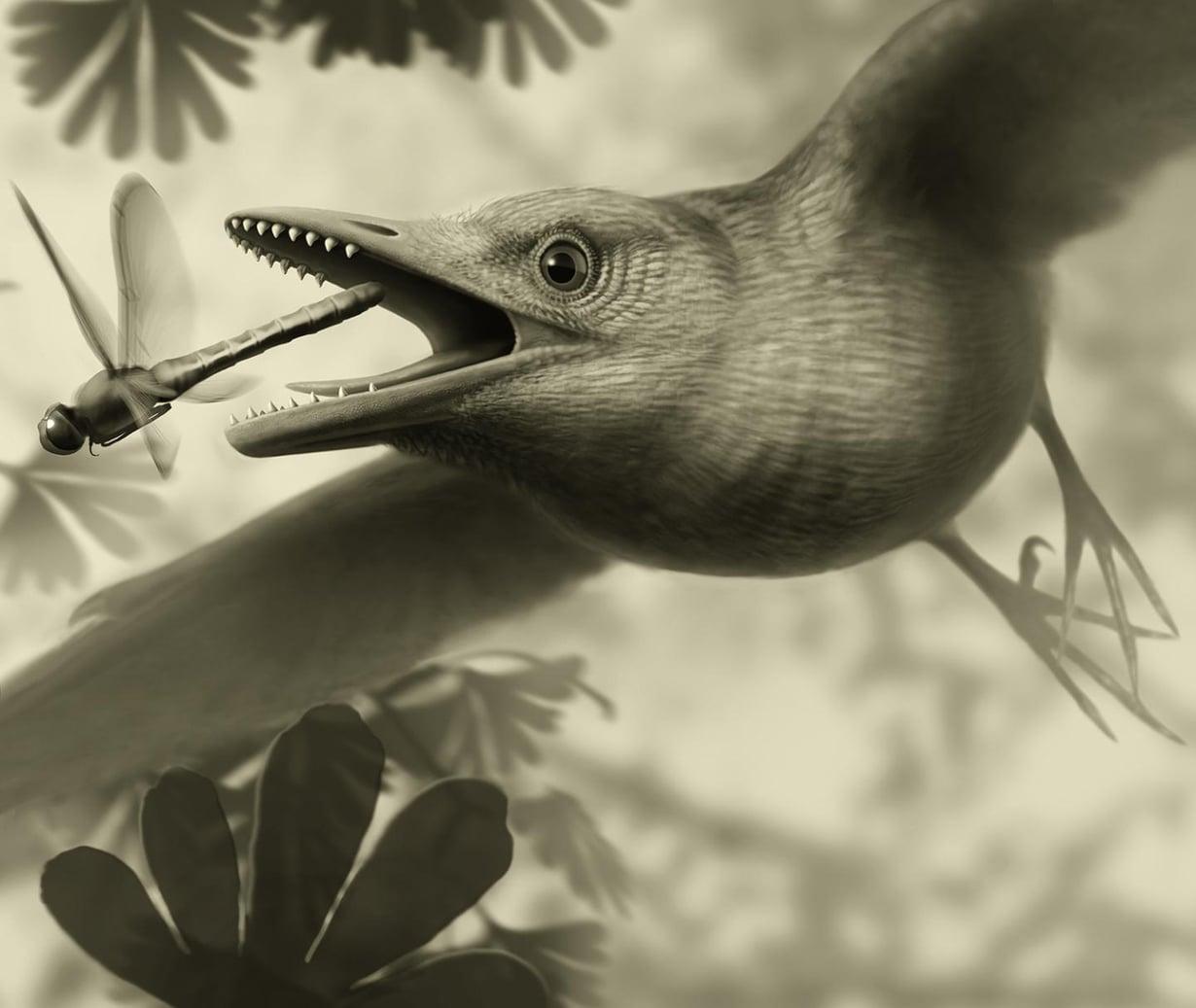 Ainakin jotkin 125 miljoonaa vuotta sitten eläneistä linnuista pystyivät lentämään. Kuva: Stephanie Abramowicz