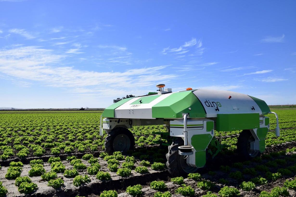 Kitkijärobotti Dino kulkee salaattirivien välissä. Kuva: Naïo Technologies