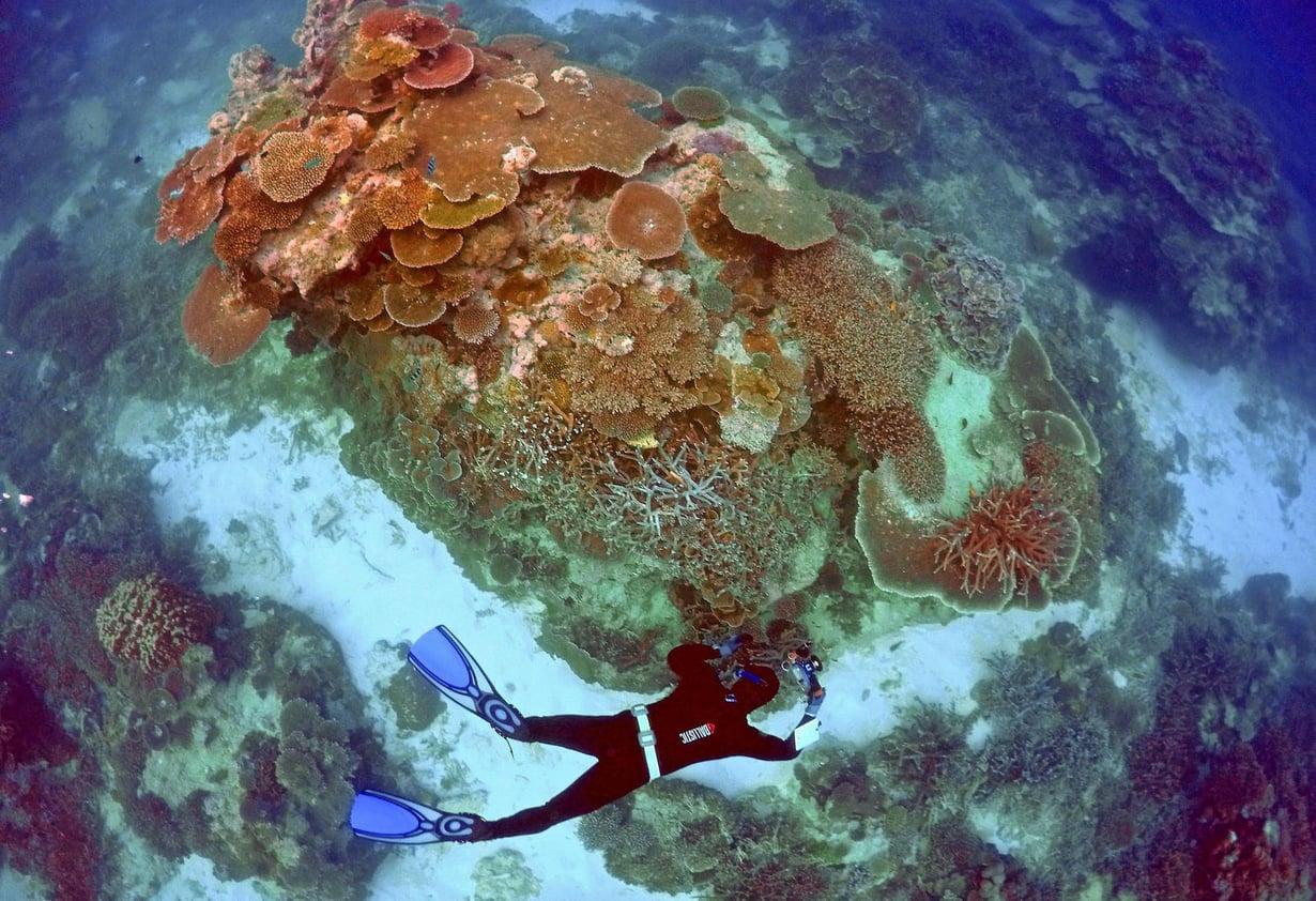 Iso valliriutta on maailman suurin koralliriutta. Kuva: David Grey