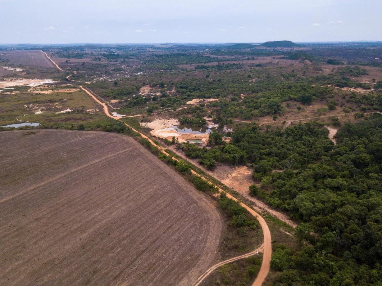 Ilmastonmuutoksen ohella metsän kaataminen viljelyksiksi edistää Amazonin kuivumista. Kuva: Shutterstock
