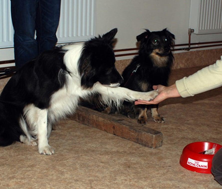 """Koiraa harmittaa, jos vain kamu saa palkinnon.  Kuva: <span class=""""photographer"""">Friederike Range.</span>"""