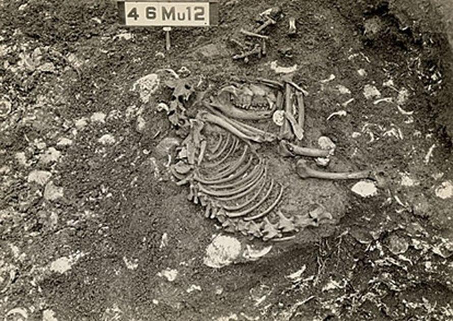 """Kentuckyssa noin 5000 vuotta sitten haudatun koiran jäännökset. Kuva: <span class=""""photographer"""">George Crothers / William S. Webb Museum of Anthropology, University of Kentucky</span>"""