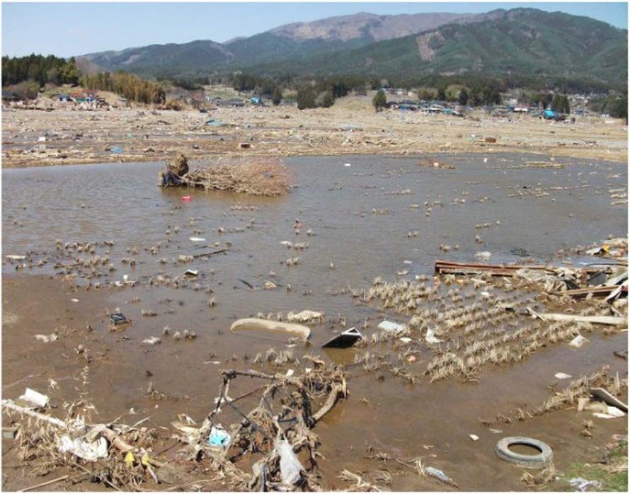 Tsunami runteli myös riisipeltoja.