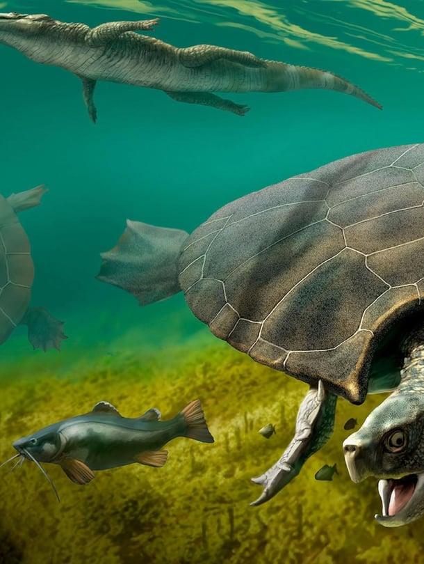 Taiteilijan näkemys Stupendemys geographicus -kilpikonnasta.