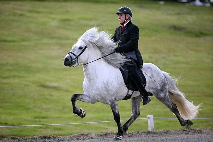 Töltissä hevosen kaikki neljä jalkaa nousevat ja laskevat vuoron perään. Tällainen nelitahtinen askellaji on myös hevosen kävely eli käynti, joka on kuitenkin huomattavasti hitaampaa.