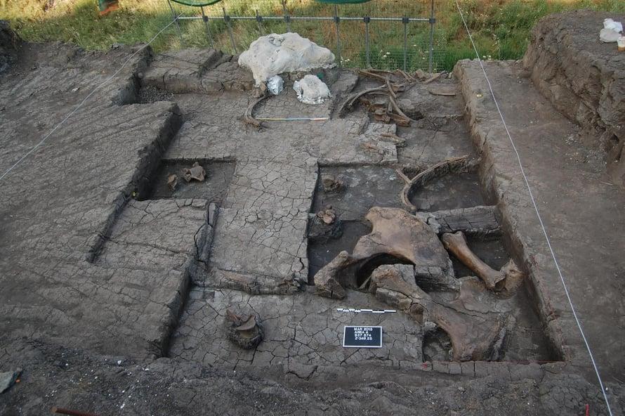 Varhaisen norsulajin luita löytyi Megalopoliksen kaivausalueelta. Kuva: Kreikan kulttuuriministeriö