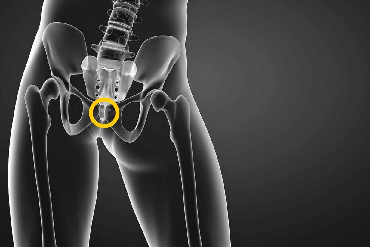 Häntäluu on pieni töppö tärkeän ristiluun kärjessä. Ristiluu kannattelee selkärankaa ja yhdistää lantion. Kuva: Shutterstock