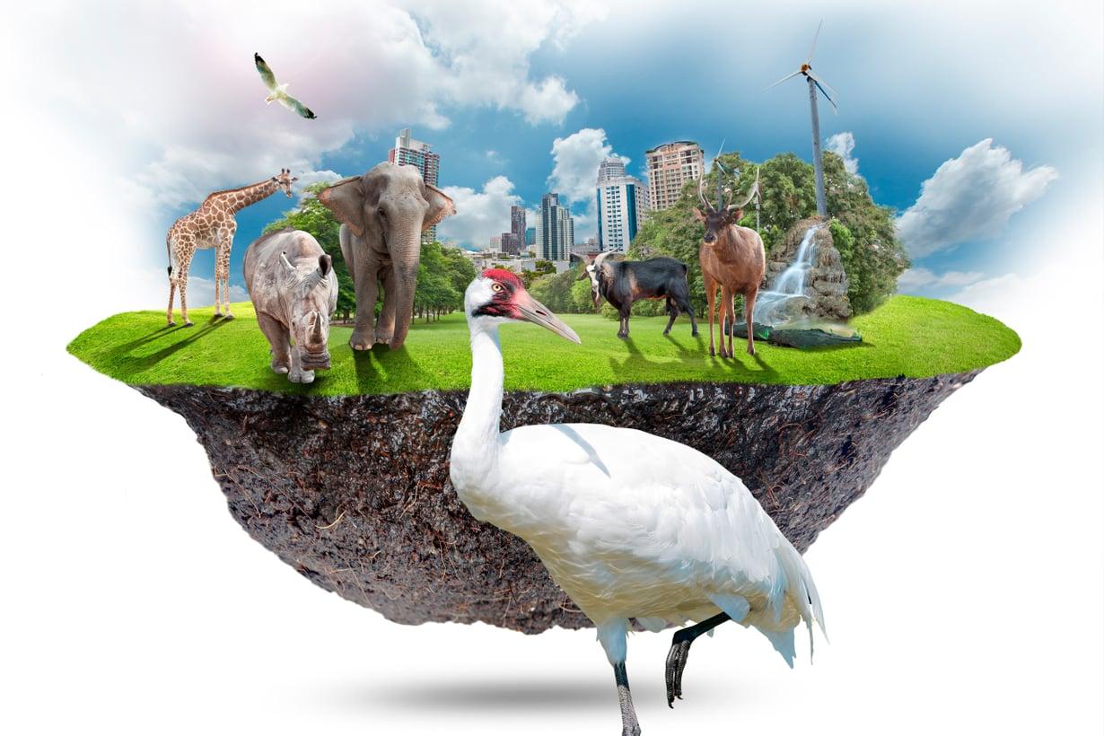 Laitumia, peltoja ja puistoja maailmassa riittää, villiä luontoa ei. Kuva: Shutterstock