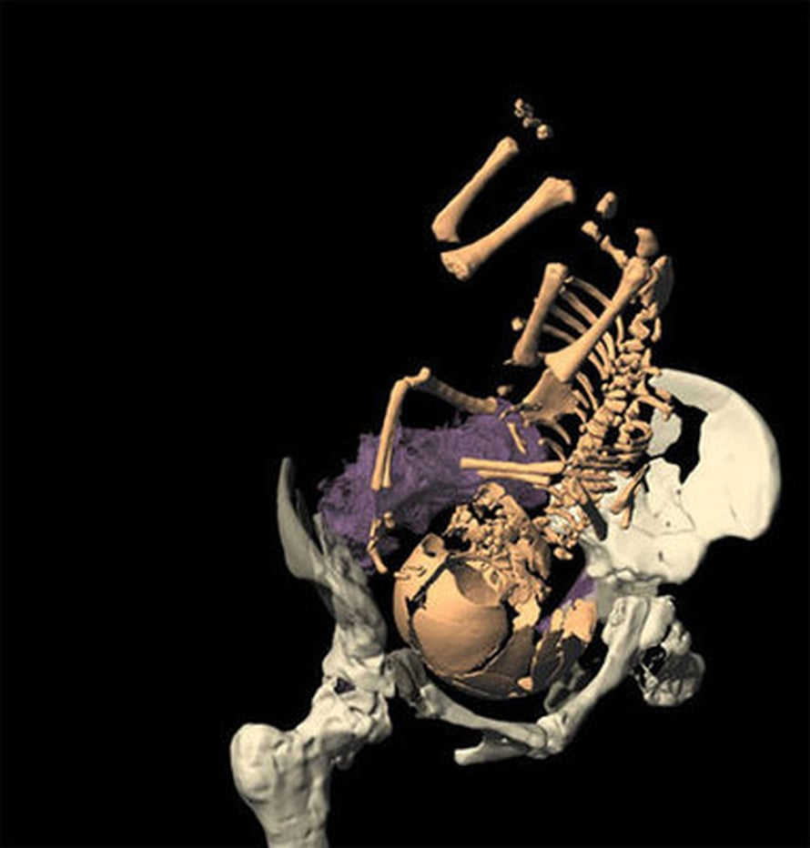"""Simulointi osoitti, että neandertalilaissynnytys oli yhtä vaikea kuin nykyihmisen. Kuva:  <span class=""""photographer"""">M. Ponce de León and C. Zollikofer, University of Zurich.</span>"""