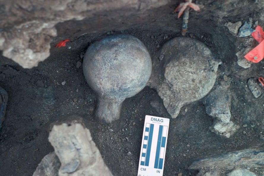 """Kaivauksilta löytyi mastodontin reisiluun päitä irrallaan varresta. Muinaiset ihmiset ehkä hakkasivat ne irti saadakseen luuydintä. Kuva: <span class=""""photographer"""">San Diegon luonnonhistoriallinen museo</span>"""