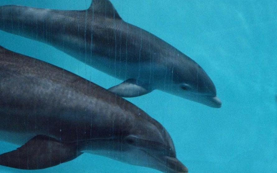"""Delfiinikin näyttää olevan itsetajuinen. Kuva: <span class=""""photographer"""">Markku Bärman</span>"""