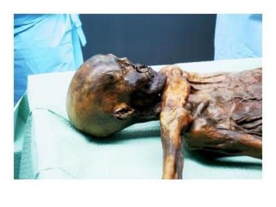 """Jäämies Ötzi majailee Etelä-Tirolin arkeologisessa museossa Bolzanossa.  Kuva: <span class=""""photographer"""">Franco Rollo, University of Camerino</span>"""