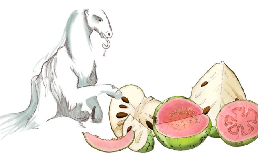 Kuusi metriä pitkä maalaiskiainen todennäköisesti nautiskeli valkeaa annoonaa ja punalihaista guavaa.