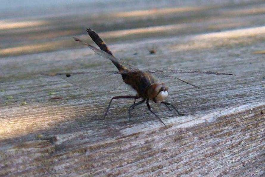 Stressi syö sudenkorentoakin.