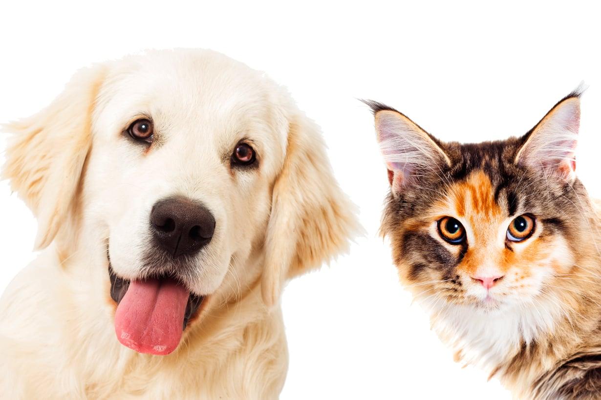 Kissa kestää yksinoloa paremmin kuin koira mutteise mikään erakko ole. Kuva: Shutterstock